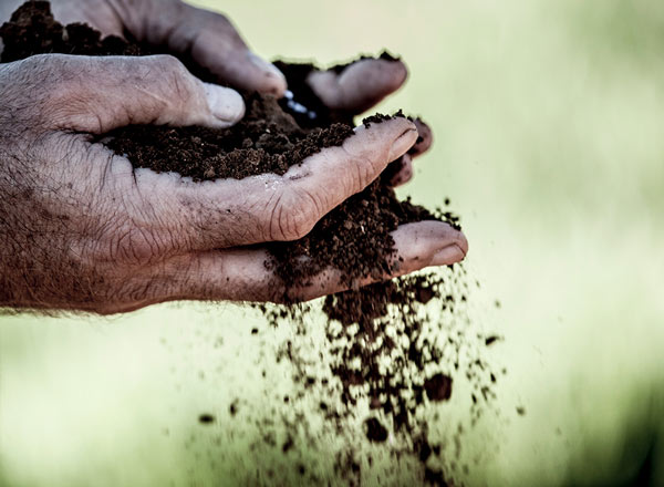 Soil held in hands